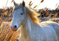 Un Cavallo del Corso di Equitazione